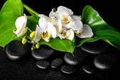 Beautiful spa concept of blooming white orchid flower, phalaenop — ストック写真