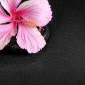 Spa background of pink hibiscus flower on zen basalt stone with  — Stock Photo