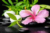 Beautiful spa still life of pink hibiscus flower, twig bamboo an — Stock Photo