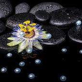 Spa still life of passiflora flower on zen basalt stones with dr — Stock Photo