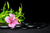 Spa still life of pink hibiscus flower and twigs bamboo on zen b — Stock Photo