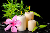 Beautiful spa concept of pink hibiscus flower, twig bamboo and t — Stock Photo
