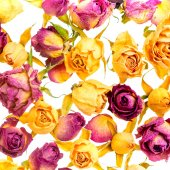 Beautiful dried colorful roses like as background is isolated on — Stock Photo