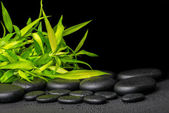 Spa concept of twigs bamboo with dew on zen basalt stones, close — Stock Photo