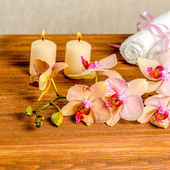 Beautiful spa concept of blooming twig orchid flower, phalaenops — Stock Photo