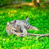 Funny cat gnaws branch on green grass, closeup — Stock Photo