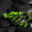 Beautiful spa concept of green twig fern, ice on zen basalt ston — Stock Photo #80113850