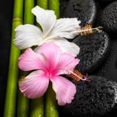 Spa achtergrond van witte, roze hibiscus bloem en natuurlijke bamboe — Stockfoto