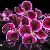 Beautiful spa still life of geranium flower, beads and black zen — Stock Photo