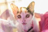 Cat cry — Stock Photo