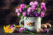 Bouquet of blooming clover — Stock Photo