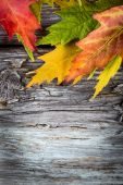Autumn background with colorful maple leaves on old wooden board — Stock Photo