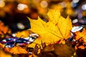Autumn leaves in autumn colours and lights. — Stock Photo