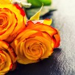 Orange rose. Yellow rose. Several orange roses on Granite background — Stock Photo #72496851