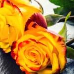 Orange rose. Yellow rose. Several orange roses on Granite background — Stock Photo #72496853