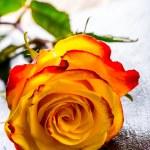 Orange rose. Yellow rose. Several orange roses on Granite background — Stock Photo #72496923