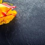 Orange rose. Yellow rose. Several orange roses on Granite background — Stock Photo #72496933
