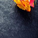 Orange rose. Yellow rose. Several orange roses on Granite background — Stock Photo #72496935