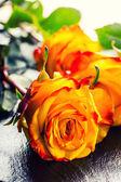橙玫瑰。黄玫瑰。几个橙色玫瑰花岗岩背景 — 图库照片