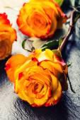 Orange rose. Yellow rose. Several orange roses on Granite background — Стоковое фото