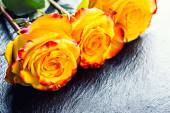Orange rose. Yellow rose. Several orange roses on Granite background — Stock Photo
