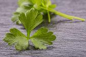 Parsley Top . Parsley or cellery Twig. Fresh parsley top on granite board. — Stock Photo