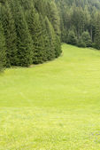 Meadow and forest in Trentino - Italy — Stock Photo