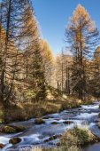 River in the forest, autumn season of Devero Alp — Stock Photo