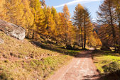 Mountain forest in autumn season — Stock Photo