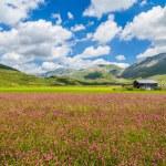 Piano Grande mountain plateau, Umbria, Italy — Stock Photo #58675645