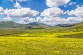 Summer landscape at Piano Grande mountain plateau, Umbria, Italy — Stock Photo