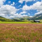 Piano Grande mountain plateau, Umbria, Italy — Stock Photo #68471807