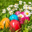 Colorful Easter eggs lying in the grass between daisy flowers — Stock Photo #68475435