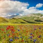 Piano Grande mountain plateau, Umbria, Italy — Stock Photo #68479203