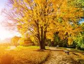Beautiful autumn scene in park at sunrise — Stock Photo
