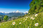 Beautiful mountain landscape in the Alps with fresh green mountain pastures — Stock Photo