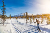 Tourist cross-country skiing in Scandinavia at sunset — Foto Stock