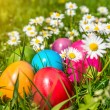 Colorful Easter eggs lying in the grass between daisy flowers — Stock Photo #68480195
