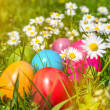 Colorful Easter eggs lying in the grass between daisy flowers — Stock Photo #68480323