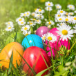 Colorful Easter eggs lying in the grass between daisy flowers — Stock Photo #68480767