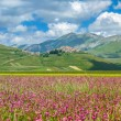 Piano Grande summer landscape, Umbria, Italy — Stock Photo #78682102