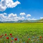 Piano Grande mountain plateau, Umbria, Italy — Stock Photo #78685406