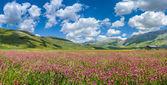 Piano Grande verano paisaje, Umbria, Italia — Foto de Stock