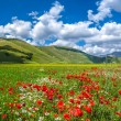 Piano Grande summer landscape, Umbria, Italy — Stock Photo #78700194