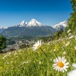 Panoramic view of beautiful landscape in the Bavarian Alps with beautiful flowers and famous Watzmann mountain in the background in springtime, Nationalpark Berchtesgadener Land, Bavaria, Germany — Stock Photo #79028078