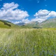 Piano Grande summer landscape, Umbria, Italy — Stock Photo #79028732