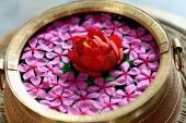 Brass vessel-red lotus-pink jasmine. Pokhara-Nepal. 0764 — Stock Photo