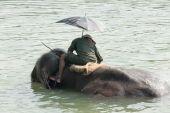 Elephant at bath. Chitwan-Nepal. 0846 — Stock Photo