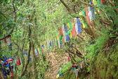 仏教の祈りのフラグ。Thrangu タシ Yangtse 修道院-ネパール。1004 — ストック写真