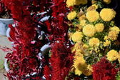 Flowers before the Takten Mingyur Phodrang-palace. Norbulingka-Lhasa-Tibet. 1265 — Stock Photo